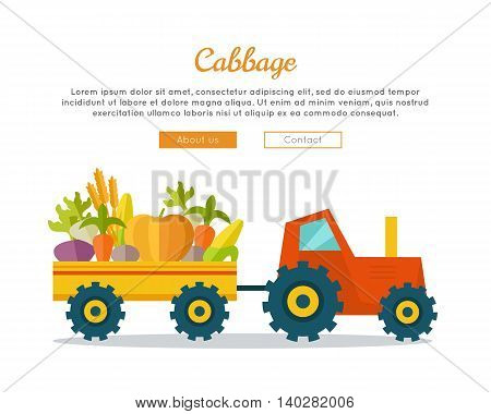 Cabbage farm conceptual banner. Flat design. Delivering fresh vegetables from farm to market. Tractor with trailer carries vegetables. Template for farmers, shops, transports company web pages.