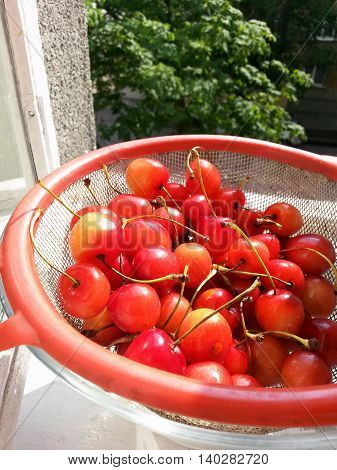 Cherries in a strainer on the windowsill in the sunlight