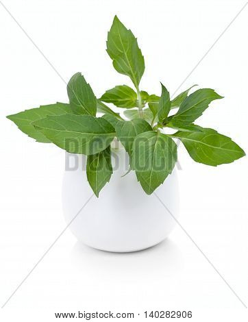 Basil leaves in a white ceramic tableware isolated on a white background.