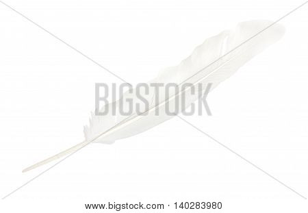 Feather Dove White, Isolated On White Background. Close-up.