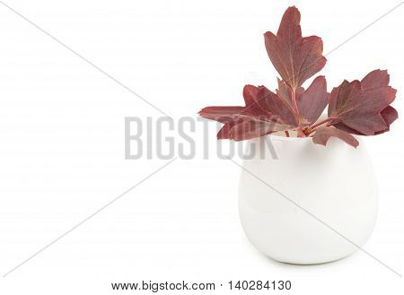 Decorative Flower Garden In A Ceramic Vase, Flowerpot. Isolated On White Background, Close-up And Bl