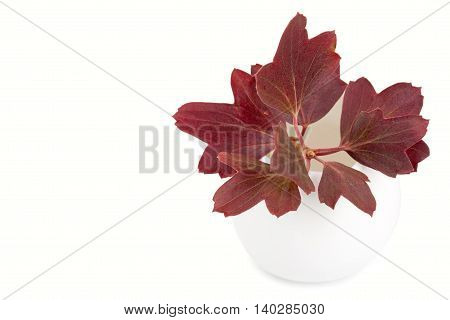 Decorative flower garden in a ceramic vase flowerpot. Isolated on white background close-up and blank place for your text.