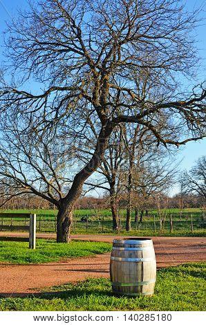 Wine Barrel at vineyard outside Fresericksburg Texas