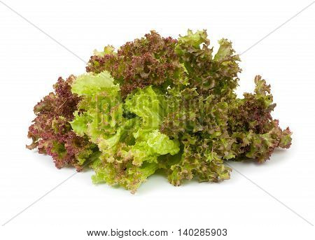 Lettuce leaves isolated on white background close-up.