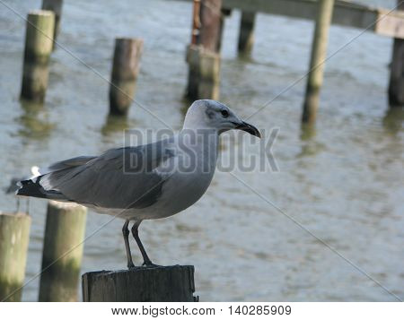 Close up of bird perched on a pole