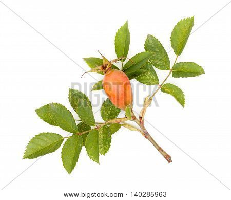 Fresh rose hips with leaves (Rosa canina) isolated on white background close-up.
