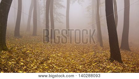Website banner of a foggy autumn wood