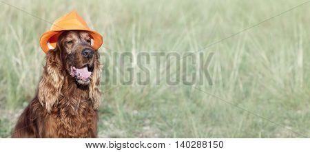 Website banner of a happy Irish Setter dog with orange hat