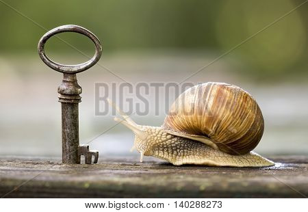 Key and snail - new home and real estate concept