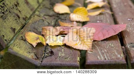 Website banner of red Autumn leaves on an old bench