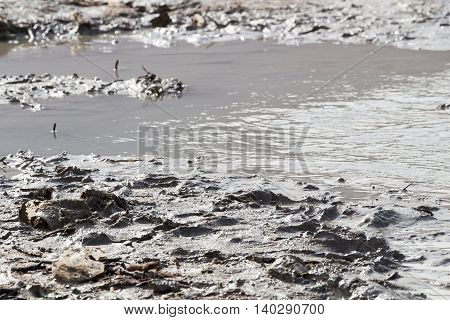 Mud of the Deade sea in nature