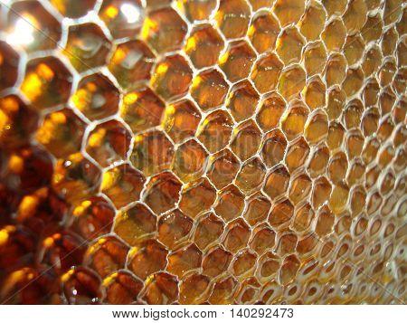 Honeycomb full of honey closeup. Season bee plant