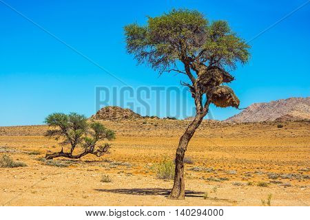 Dirt road in the Namib desert endless. At a roadside tree - big nest tropical bird - finch. The concept of exotic and extreme tourism