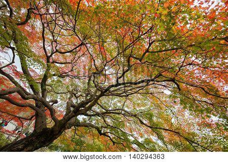 Beautiful colorful tree in lush autumn season.