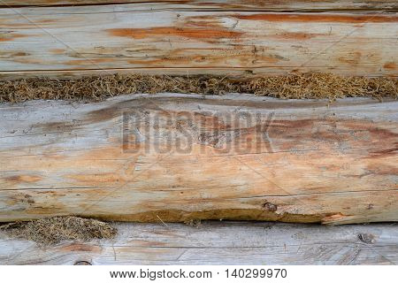 Old wooden log house wall with moss insulation closeup