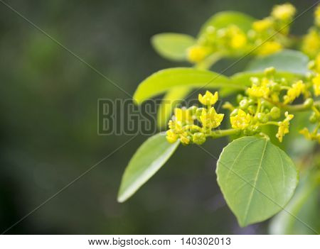 A branch of a tree with yellow flowers