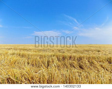 Wheat field after harvest during sunny day