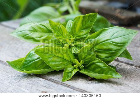 sprigs of basil on an aged wooden surface close up