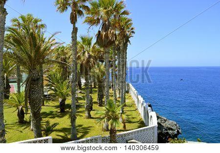 Palm trees on Callao Salvaje coast in Adeje Tenerife