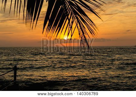 Golden sunset at the forefront of palm leaves Florida.