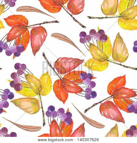 Seamless pattern with a floral ornament of the watercolor red and yellow autumn leaves and purple berries on the branches,viburnum tree on a white background