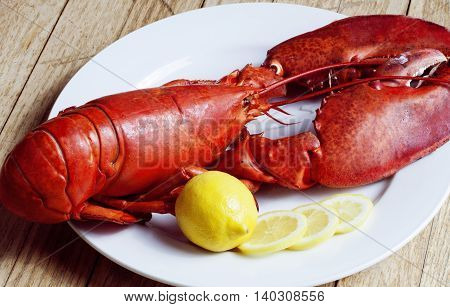 Fresh Boiled Atlantic Lobster on white dish with lemon