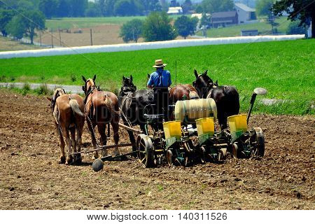 Lancaster County Pennsylvania - JUne 8 2015: Amish farmer plowing a field on his farm with a team of five horses