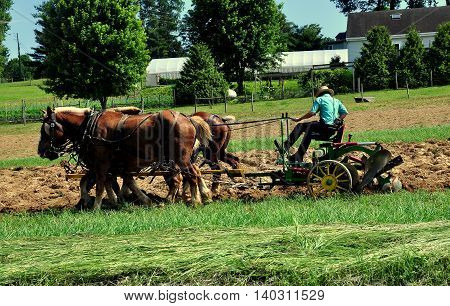 Lancaster County Pennsylvania - June 8 2015: Amish farmer plowing a field with his team of two horses