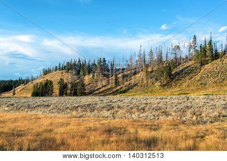 Landscape In Pelican Valley