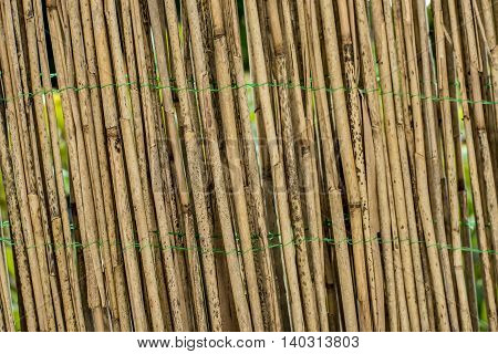 Woody fence made out of bamboo poles