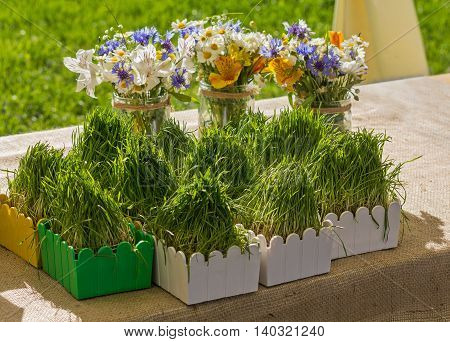 Wild flowers in a glass jar and herbs in pots on a table