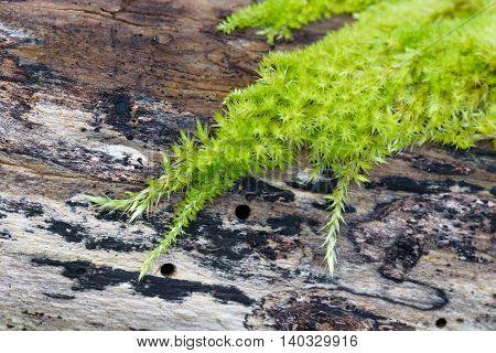 Abstract in vibrant green moss growing on a dead log