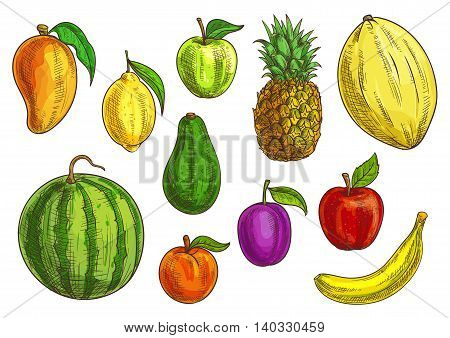 Hand drawn tropical and exotic fruits illustration. Isolated fruit elements. Vector sketches of banana, green and red apple, mango, watermelon, lemon, avocado, apricot, plum, pineapple and melon