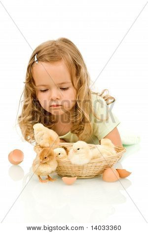 Little Girl With Small Fluffy Chickens