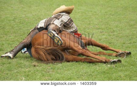 Horse & Rider Resting