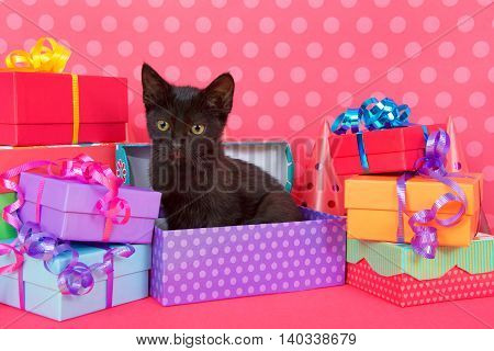 Fuzzy black kitten with yellow eyes sitting in purple spotted birthday present box with colorful presents stacked around bright pink table with pink polka dot background. Copy Space