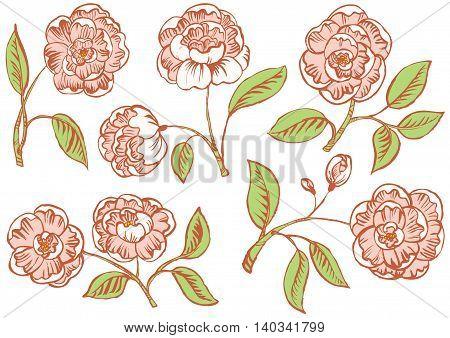 Doodle vector  floral rose set vector illustration