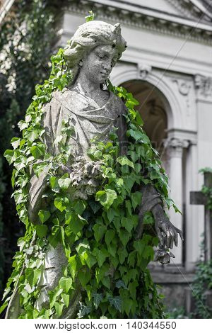 A praying statue woman covered with creeping ivy in an old cemetery.