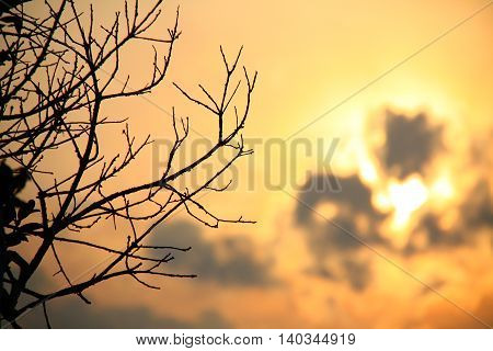 Shadow, silhouette of branches in the sunset sky