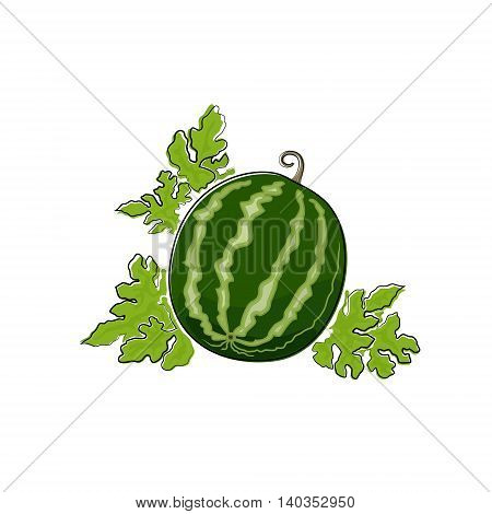 Berry Watermelon Isolated on White Background, Fruit Watermelon ,Vector Illustration