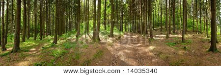 Forest panorama, spring time