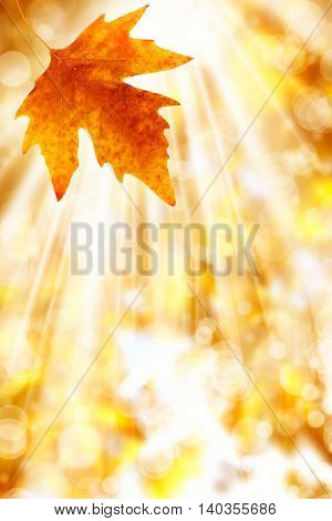 an image of a leaf in autumn
