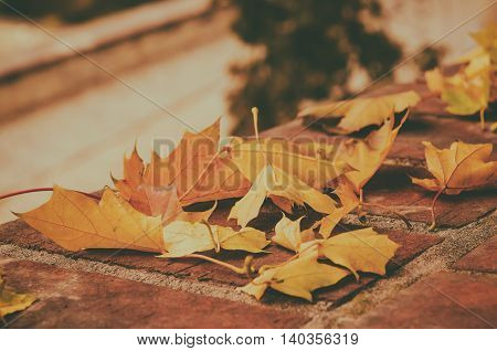 Autumn maple leaf lying on the tile, seasonal fall natural vintage hipster background