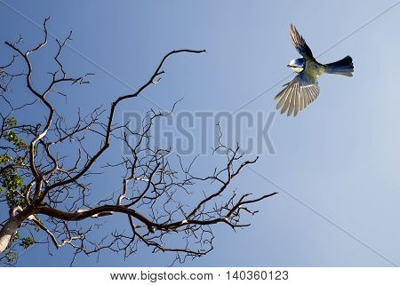 Bird in flight against blue sky with blooming tree on background
