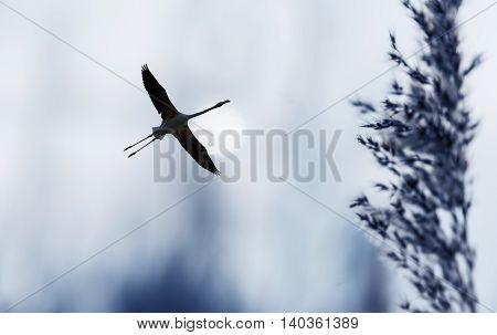 Beautiful tropical bird in flight against night sky background