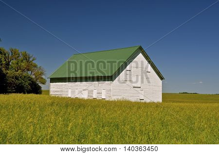 Old white granary or shed standing in the long prairie grass