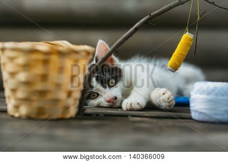 cute small lovely curious baby cat or kitten with white color spotted fur and whiskers playing with thread on twig near straw basket wooden background outdoor