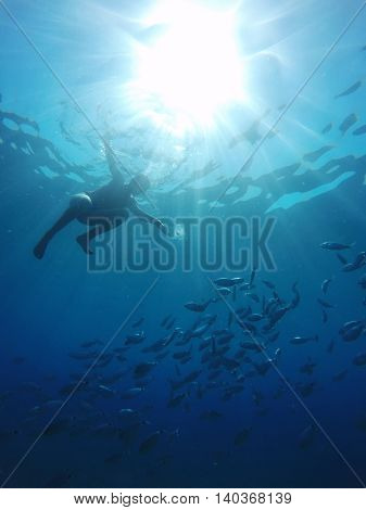 people in the underwater world