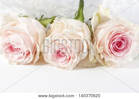 Wedding background with roses and lace