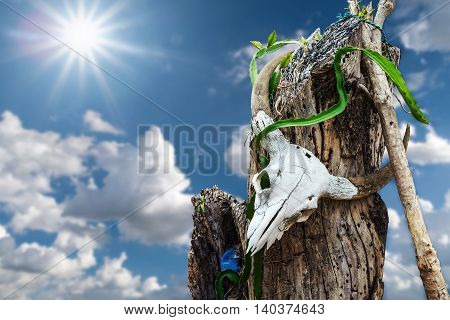The remains of a buffalo skull on the stump dry with sunlight and sky background.